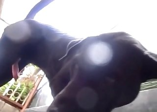 Stunning anal sex with passionate hound