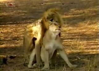 Incredible action with a young lion