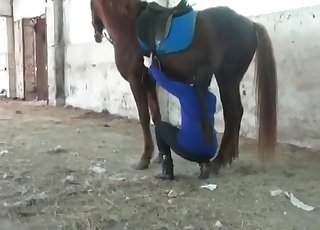 Beautiful brown horse in amazing bestiality