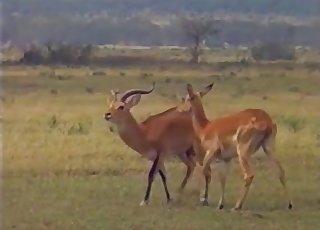 Wild animals having amazing sex on cam