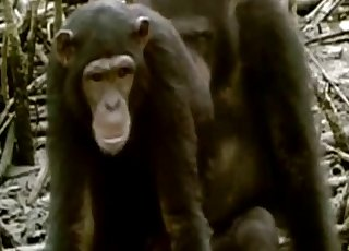 Monkeys enjoying hardcore sex