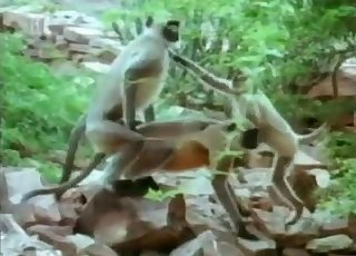 Stunning small monkeys have amazing outdoor sex
