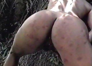 Old-school farm animal sex