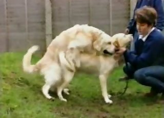 Two dogs gleefully fucking outdoors