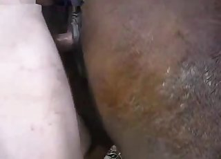Well-endowed dude fucks a brown mare