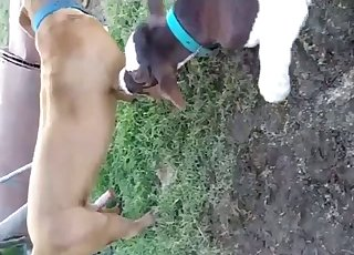 Two hot animals have nice outdoor sex