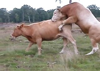 Intense fucking action for a horny cow and a bull