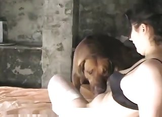 This girl wears a black bra and gets orally pleased by a puppy
