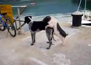 Small and young dog fucks a big aggressive beast