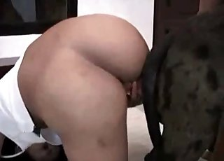 Pooch with a large cock is dominating a big booty