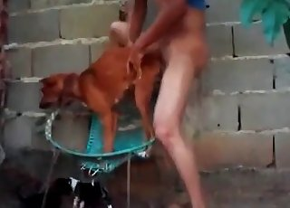 Smallish doggy in the super-fucking-hot animality