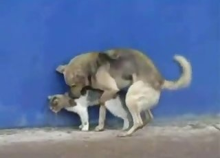 Dog bangs a cute kitty in doggy style