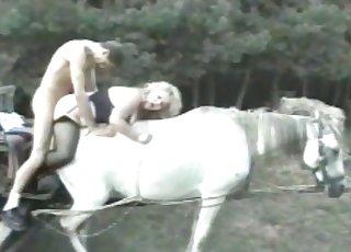 Alluring white stallion in bestiality movie