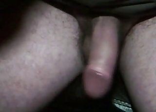 Cute black dog nicely licks my hard cock
